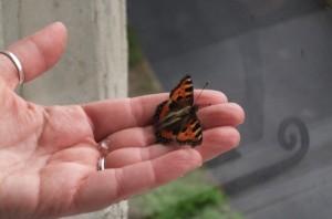 East_Dene_butterfly_March_147947ea8db734
